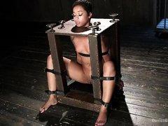 Черная блядина подвергается жестким пыткам
