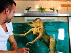 Трахнул грудастую красотку в аквариуме